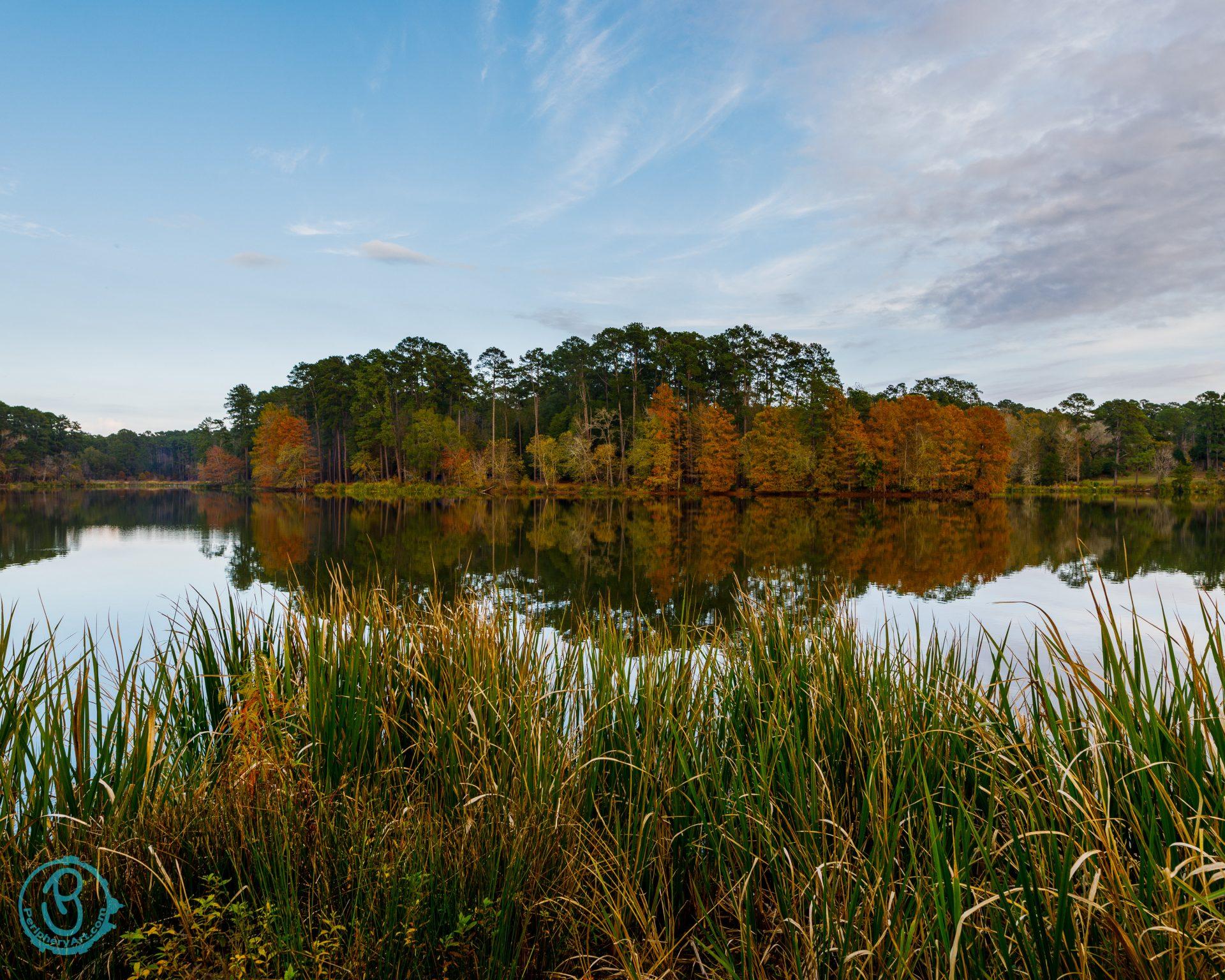 Treeline on lake